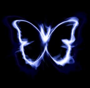 butterfly-1613341_1920 (1)